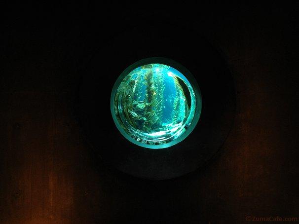 Nemo's View