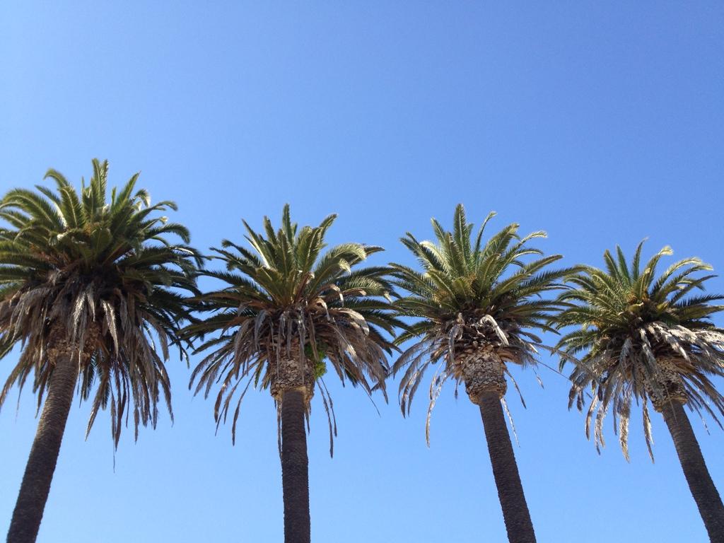 Refugio Beach Palm Trees